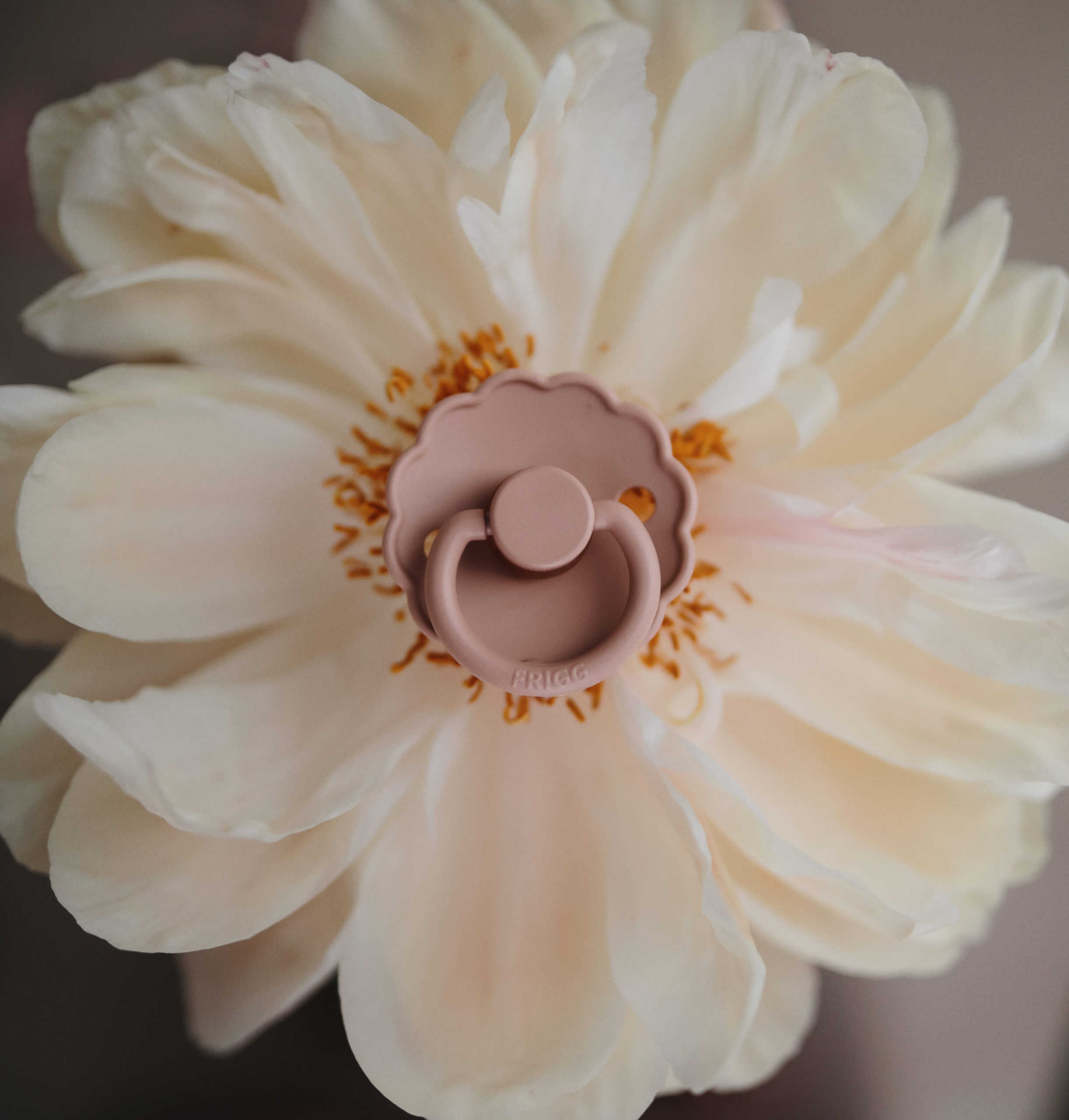 FRIGG daisy speen